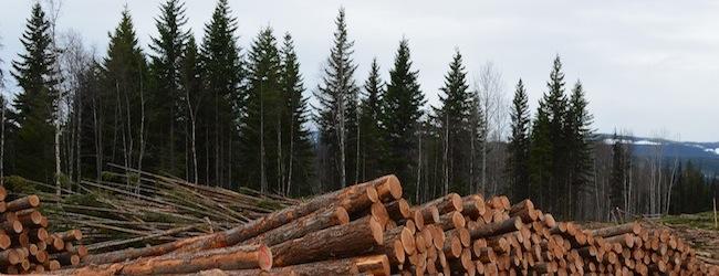 Forestry.jpg