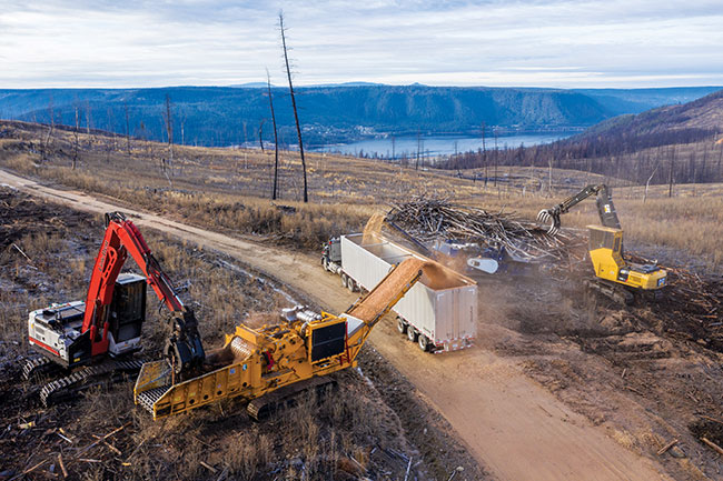 Forest stewards: Williams Lake company takes a holistic approach to forestry